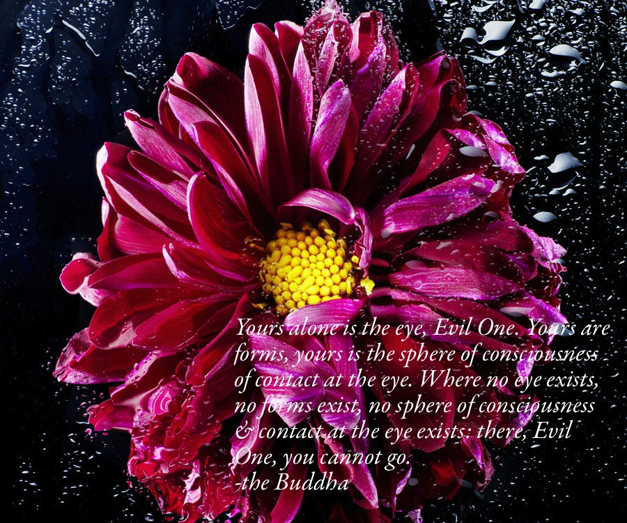 Wisdom of the Buddha 3