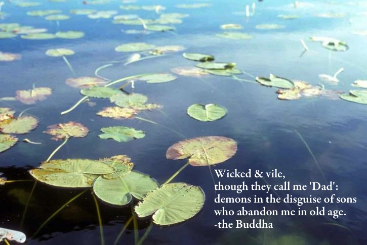 Wisdom of the Buddha 6